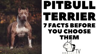 Before you buy a dog - PITBULL TERRIER - 7 facts to consider!  DogCastTV! Resimi