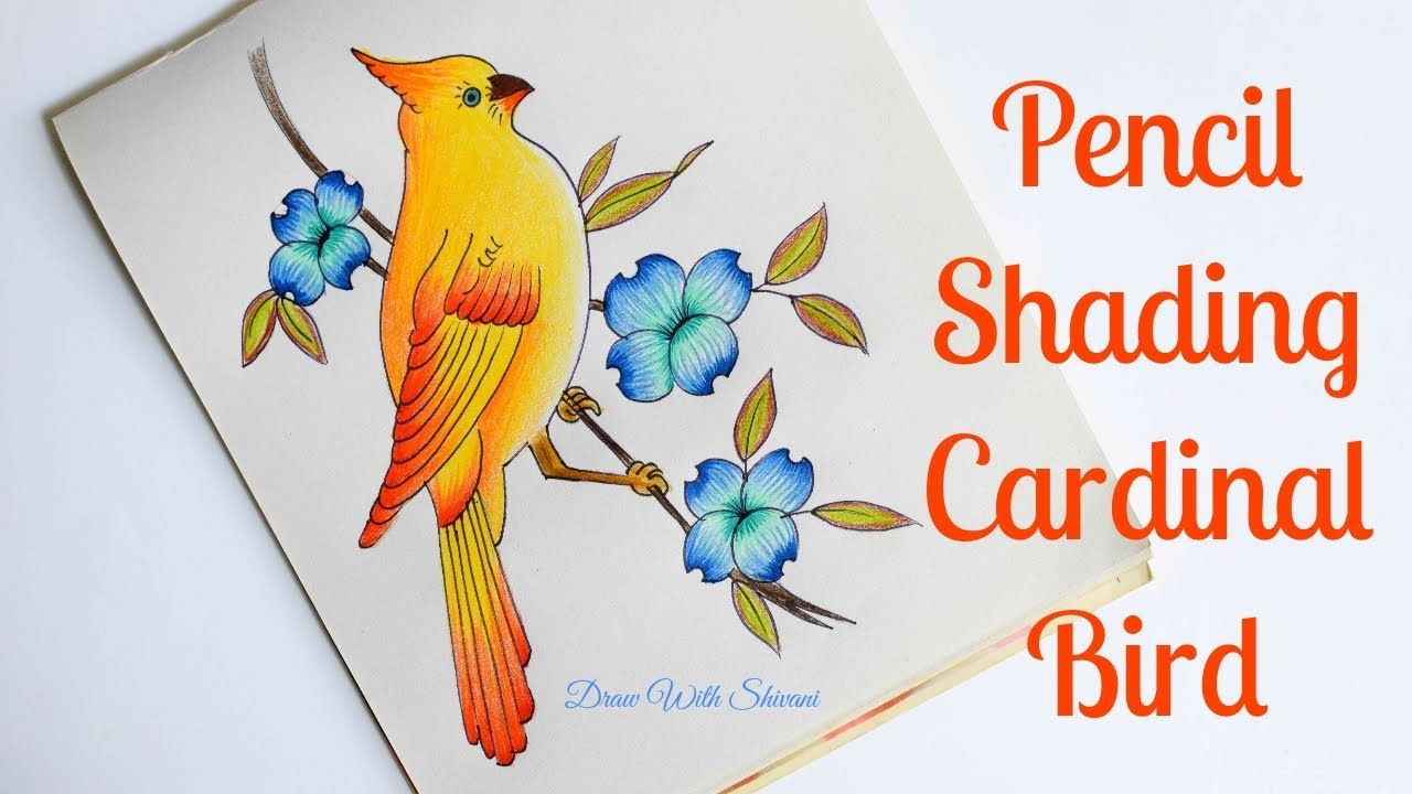 How to draw cardinal bird pencil color shading yellow bird with flowers