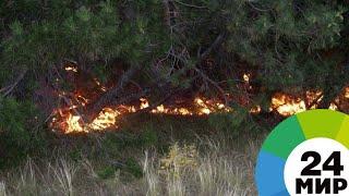 Лесные пожары в Заполярье тушат с самолета МЧС - МИР 24