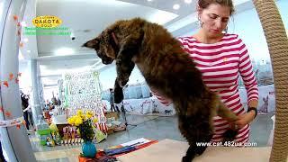 20102018, Харьков, Выставка кошек, RUI, Локомотив, часть 12, работа ринга, эксперт
