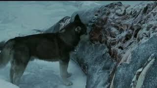 Момент из фильма,, Белый плен,, 2005