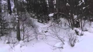 видео Природа Якутии – красота, которую необходимо увидеть своими глазами