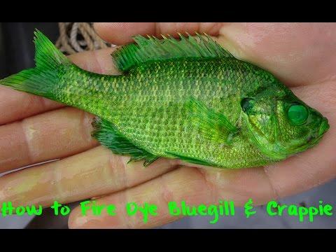 How to Fire Dye Bluegill & Perch - YouTube