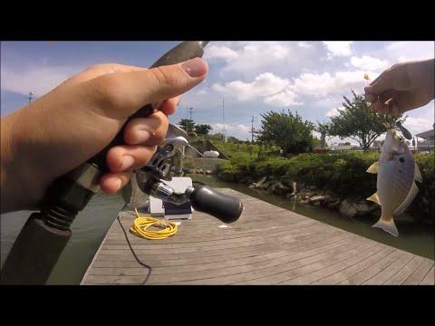 Multi Species Fishing In Lewes, Delaware