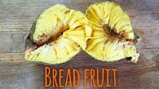 BREADFRUIT||HOW TO EAT IT RAW||URU||ULU||