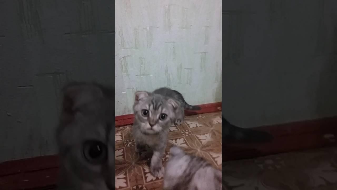 котята купить москва - YouTube