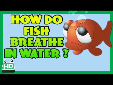 How Do Fish Breathe In Water?