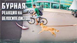 Атака на велосипедистов
