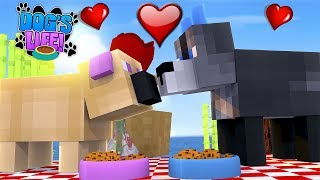 Minecraft DOG'S LIFE || THE FIRST KISS, PUPPIES DONNY & LEAH FALL IN LOVE || Minecraft Roleplay