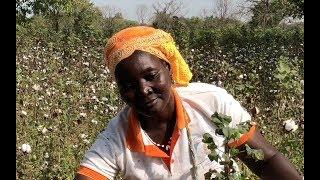 Fashion's cotton crisis: meet the women farmers leading the change