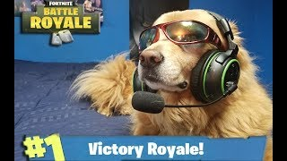 Fortnite Battle Royale Talented DOG Plays And Wins Fortnite SOLO Victory Vs THANOS!