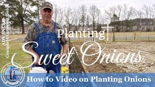 HD How to Grow Sweet Onions from Seedlings