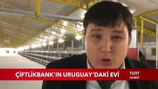 Çiftlik Bank Mehmet Aydın'ın Uruguay'daki Evi Görüntülendi