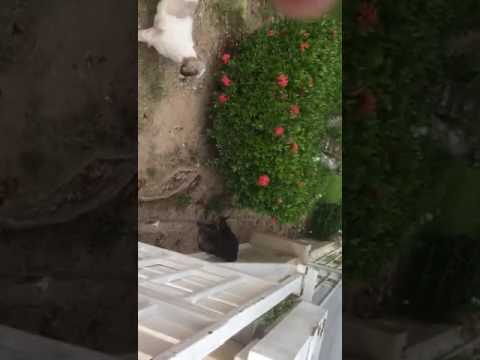 Buddy dog vs cat fight
