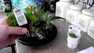 Aquarium Plants, Ebi Gold Shrimp Soil, Crystal Red And Red Rili Shrimp From Aquatics Live 2012