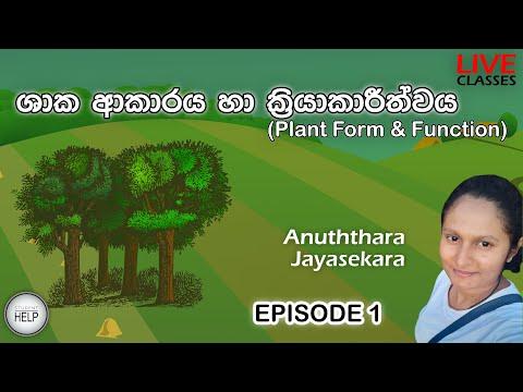 Student Help | Live Classes | Biology | Plant Form & Function | Episode 1