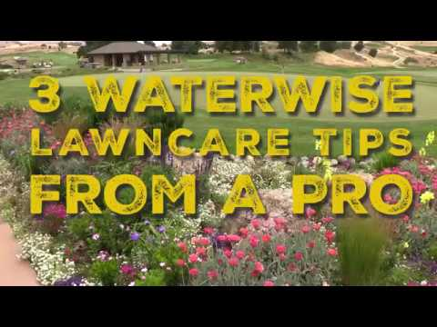 Conservation Quick Tips: 3 Waterwise Lawncare Tips From a Pro