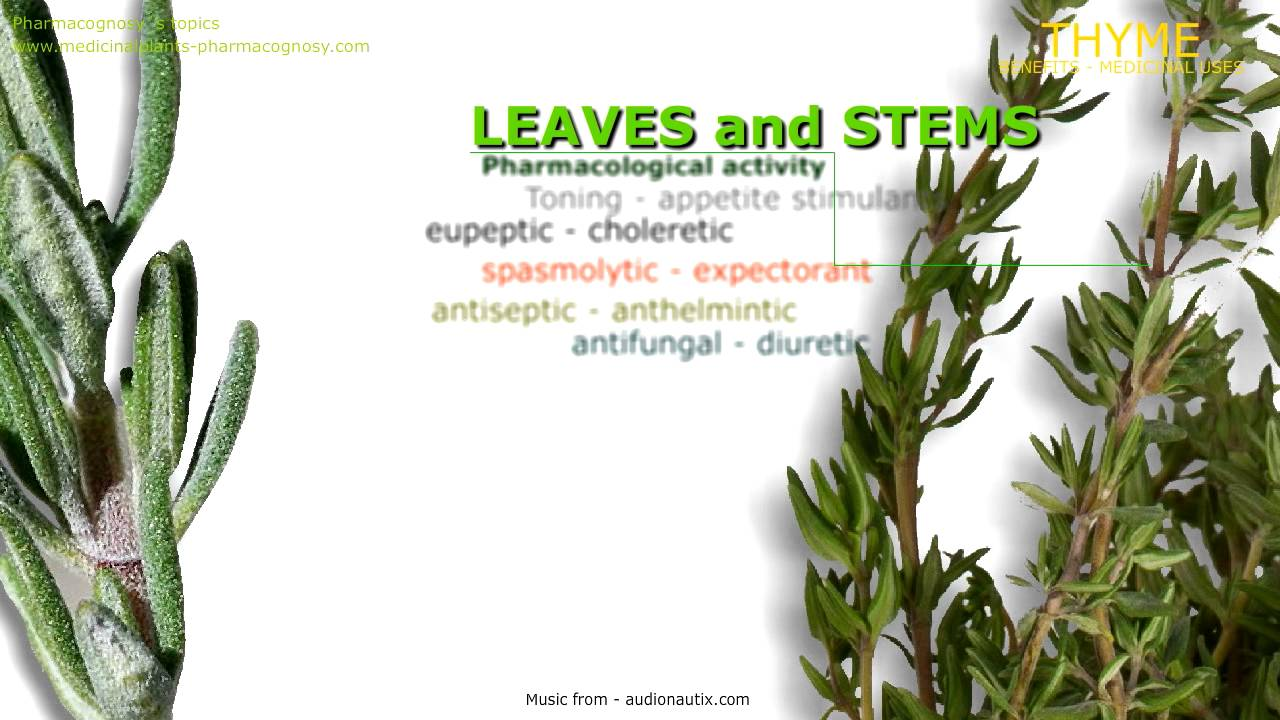 Thyme Plant Health Benefits Uses Of Thyme Youtube