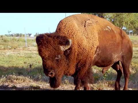 Rocky Mountain Arsenal National Wildlife Refuge - Colorado