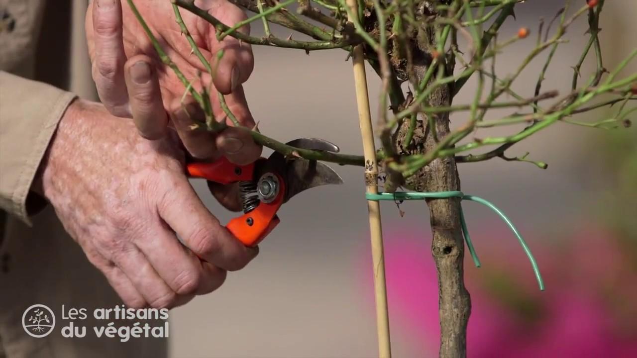 Quand Et Comment Tailler Un Rosier quand et comment tailler un rosier tige ?