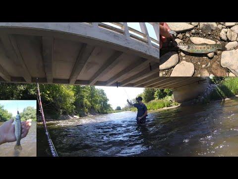 Insane Credit River Trout Fishing (Toronto Fishing)