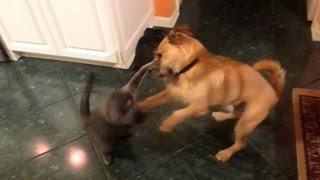 Popular Videos - Canidae & Felinae