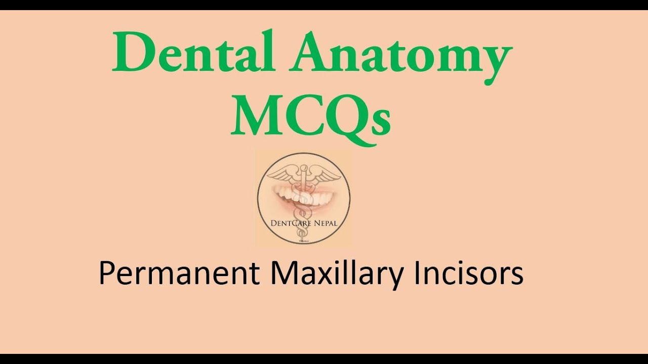 Mcqs In Dental Anatomy Maxillary Central Incisor And Maxillary