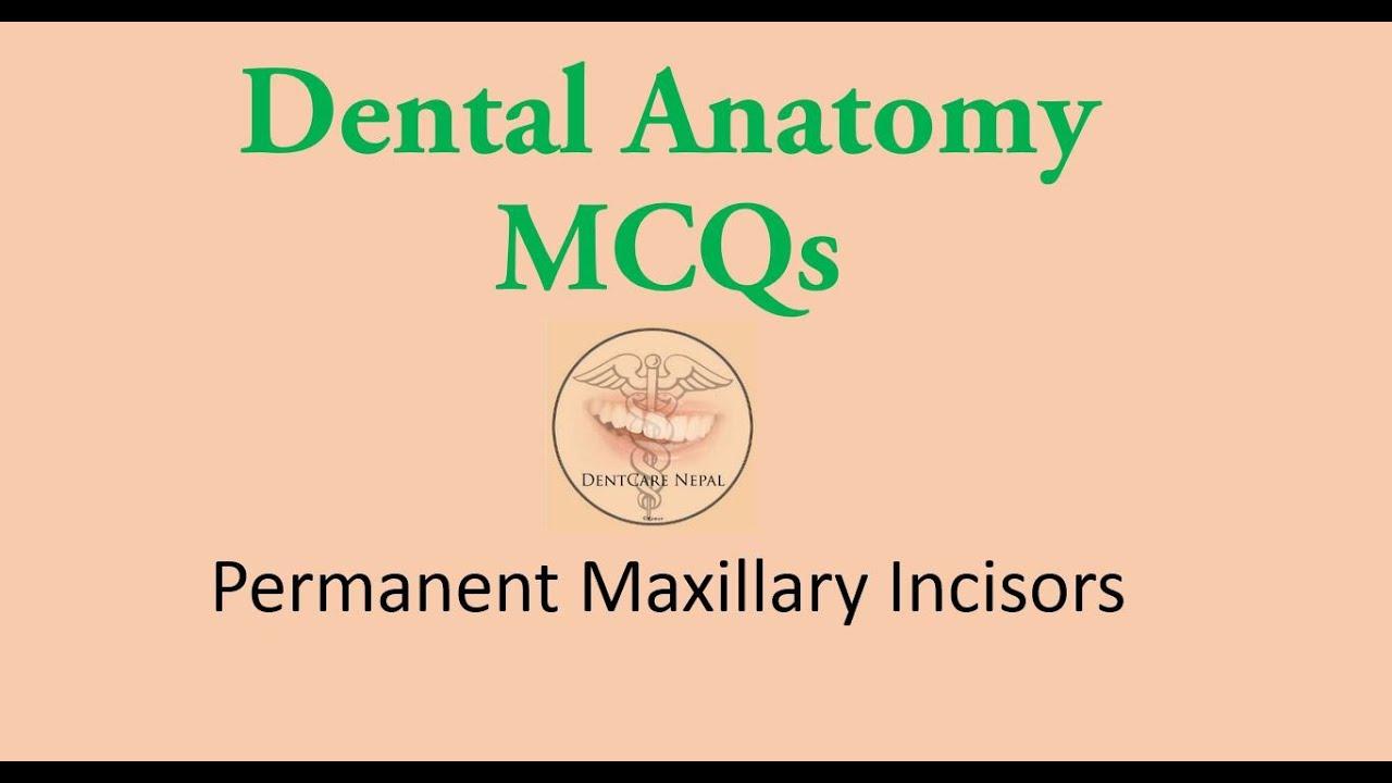 MCQs in Dental Anatomy - Maxillary Central Incisor and Maxillary ...