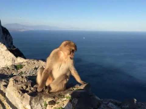 Rock Of Gibraltar | Location Picture Gallery |One Of The Mos