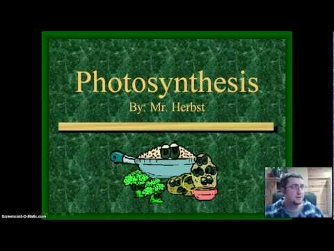 Photosynthesis - The Production of Sugar