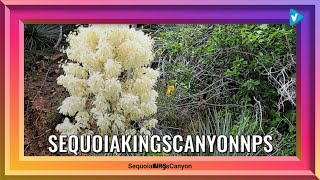 #SequoiaKingsNPS News: COVID-19 UPDATE 5/22/20: Sequoia and Kings Canyon National Parks will remain