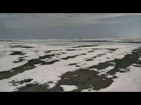 Polar Bears Cape South - Wapusk National Park Cam 04-21-2018 11:01:56 - 12:01:57