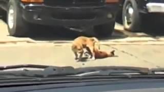 Dog dies while fuckin