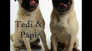 Pug Rescue Of New England (prone): Our Pugs Available For Adoption