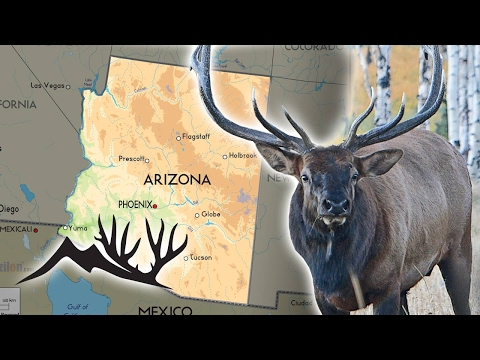 Arizona Big Game Application Information
