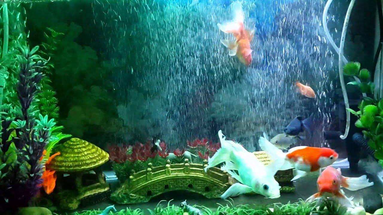 Kết quả hình ảnh cho bể cá cảnh đẹp