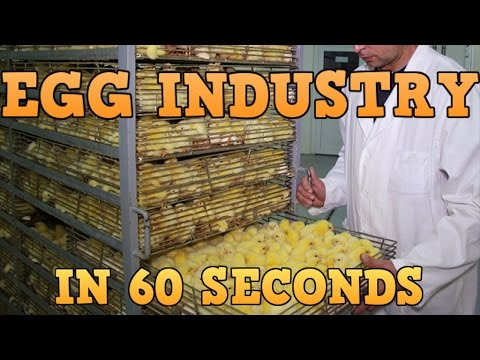 Egg Industry In 60 Seconds