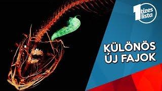 széles galandféreg biohelmintus)