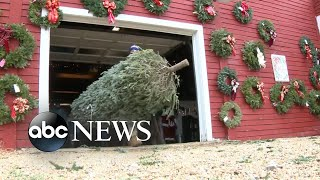 Local Christmas tree farms see record sales numbers | WNT