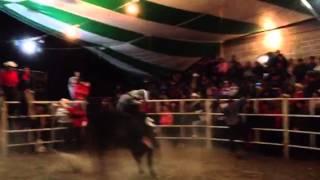 Rancho el solitario de tlaunilolpan y su toro diamante negr