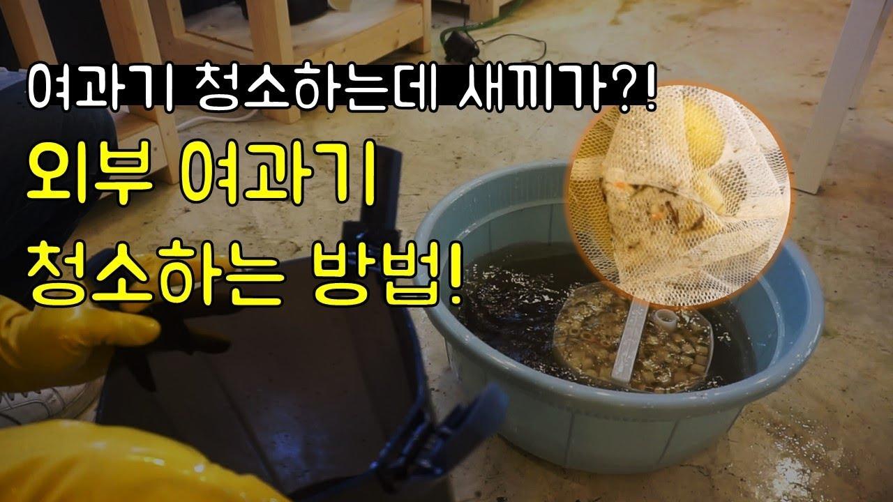 여과기 청소 중 발견된 이것은?! 외부여과기 청소하는 방법!