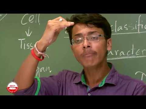 Class 9 Biology Diversity in Living Organisms B How can you classify Basis of classification