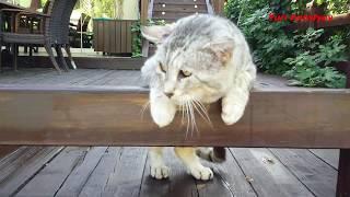 Кошки- это кошки