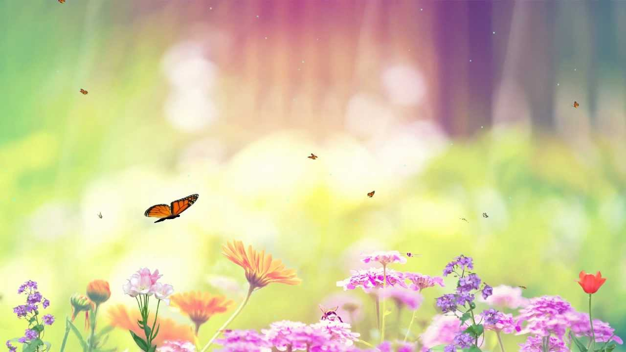 butterfly paradise screensaver http www screensavergift com youtube