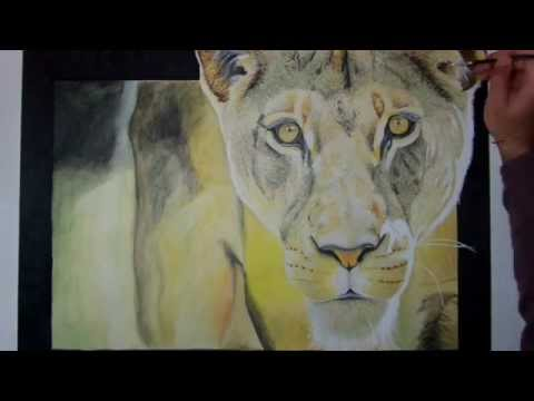 drawing lioness by Antonio Greco