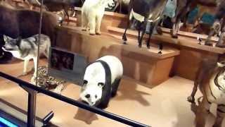 上野動物園に隣接している国立科学博物館動物で「科学標本動物園」が開...