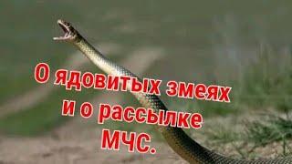 О рассылке МЧС про ядовитых змей/ О змеях якобы разбросанных в ящиках