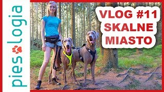 Vlog #11 Czechy z psem - skalne miasto