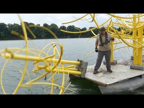 Fish Structure And Habitat Improvement On Barren River Lake