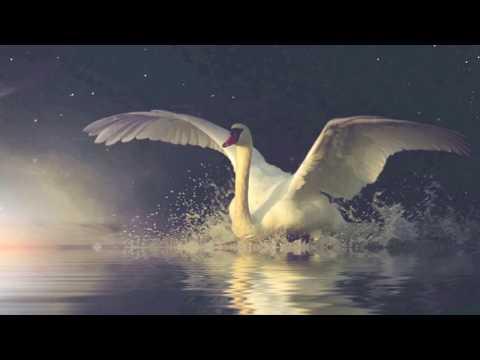 Перелётная птица